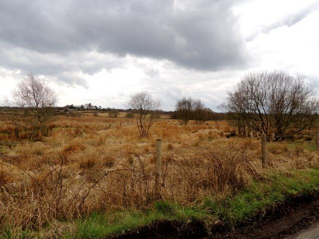 Trees and bog, Ballynamullan