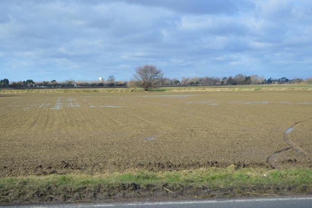 Field by Rampton Rd