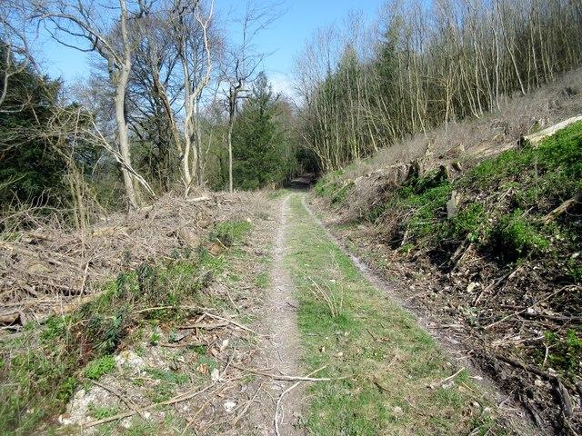 Bridleway through clearing