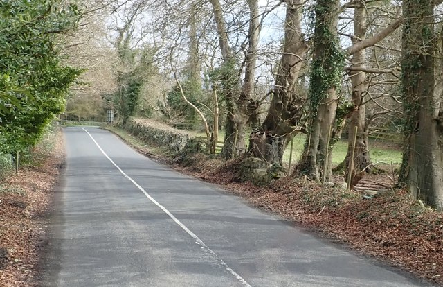 The tree-lined Lower Ravensdale Road