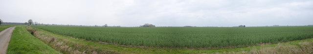 Panorama of Billingborough Fen