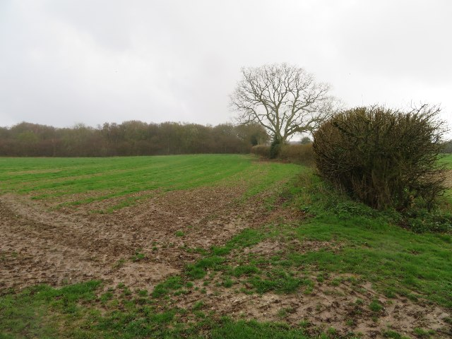 View towards Pardown Copse by Sandy B