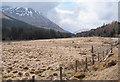 NN2931 : Grass tussocks in Glen Lochy by Trevor Littlewood