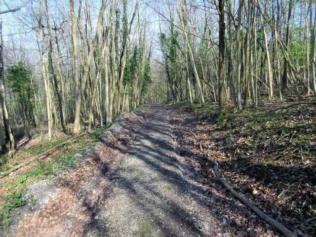 Forest track to Barlavington