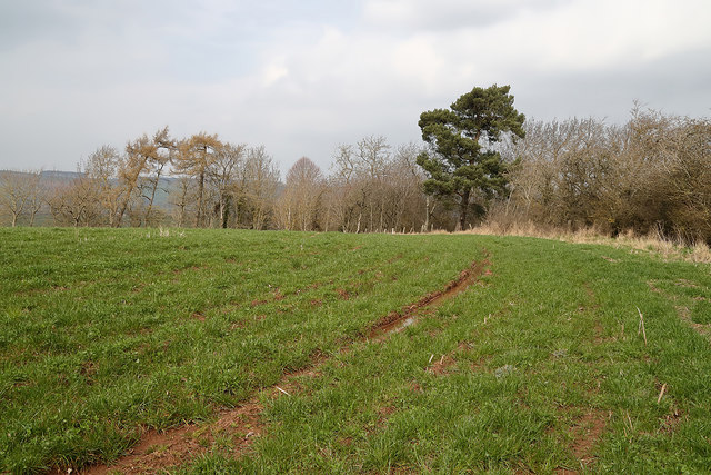 An arable field at Crailing