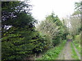 TQ7512 : Path at RSPB Fore Wood by PAUL FARMER