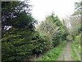 TQ7512 : Path at RSPB Fore Wood by PAUL FARMER