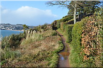 SX9262 : South West Coast Path (Rocked Walk) by N Chadwick