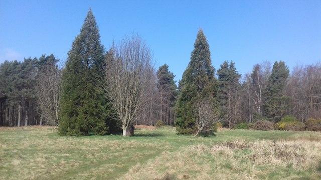 Binning Woods