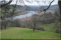 SX8159 : Dead tree overlooking River Dart by N Chadwick