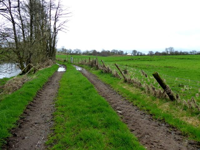 Tracks along a lane, Bancran