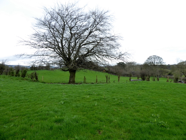 Tree, Bancran