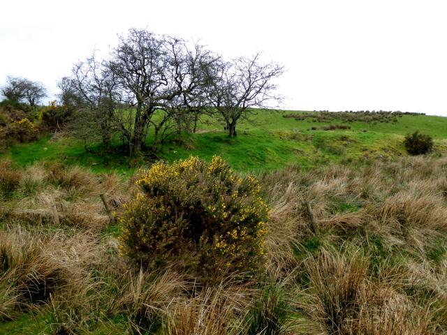 Rough ground, Bancran