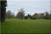 TQ2463 : Cheam Park by N Chadwick