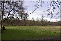 TQ2263 : Nonsuch Park by N Chadwick