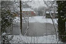 TQ5843 : Pond by Vauxhall Lane by N Chadwick