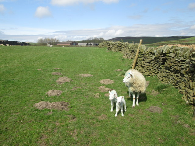 Footpath towards Cockey Farm