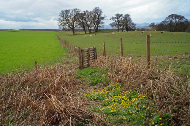 Outlook from Drummondreach Oak Wood