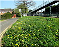 ST3091 : Profusion of dandelions on a Malpas corner, Newport by Jaggery