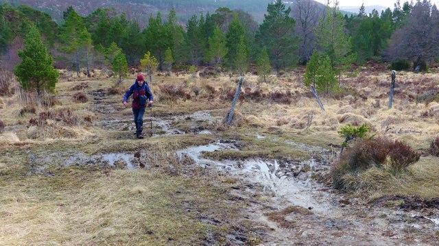 Boggy bit on the path round Loch Gamhna
