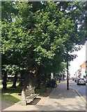 TQ3370 : Massive oak tree near the war memorial, Westow Street, Upper Norwood, London by Robin Stott
