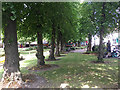 TQ3370 : Two rows of lime trees in open space by Westow Street, Upper Norwood, London by Robin Stott