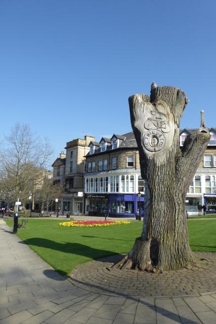 Tree for the Tour de France