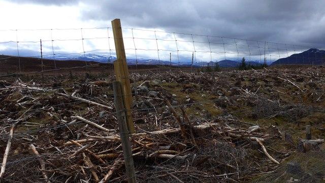 Clear-fell west of Loch Gynack