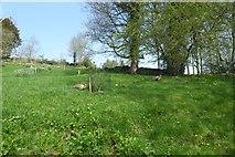 SE2768 : Pheasants near Fountains Hall by DS Pugh