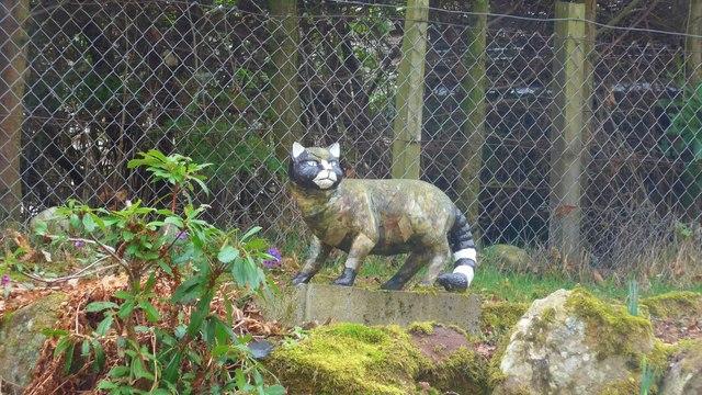 Newtonmore wildcat - 2