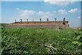 TQ5479 : Rifle butts, RSPB Rainham Marshes by Jim Osley