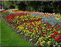 TQ2979 : Spring flowerbed in St James's Park by Neil Theasby