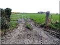 H3283 : Muddy field entrance, Meaghy by Kenneth  Allen