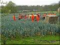 TF2264 : Migrant EU labour? : Week 17