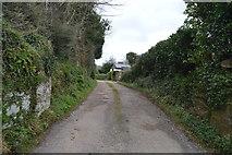SX8157 : Road to Ashprington Cross by N Chadwick