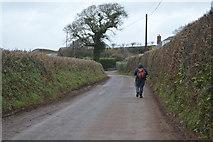 SX8157 : Heading to Ashprington Cross by N Chadwick