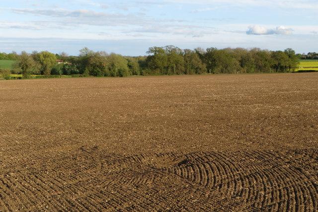 Spinney by Manor Farm