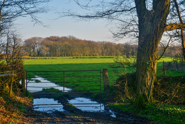 East Devon : Grassy Field & Gate