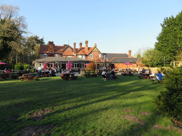 The New Forest in Ashurst