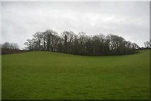 SX8668 : Teignwood Plantation by N Chadwick