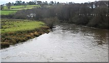 SX8061 : River Dart by N Chadwick