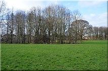 TQ2163 : Trees, West Ewell by N Chadwick
