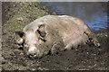 NT5010 : Mud glorious mud : Week 17