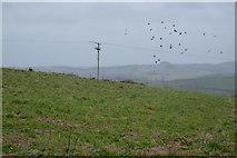 SX8057 : Devon pasture by N Chadwick