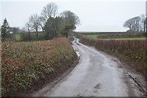 SX8058 : Wet Devon lane by N Chadwick