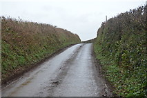 SX8059 : A quiet Devon lane by N Chadwick