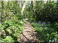 TQ7106 : Path in Gillham Woods Nature Reserve by PAUL FARMER