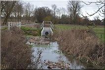 TR2158 : The Nailbourne at White Bridge by N Chadwick