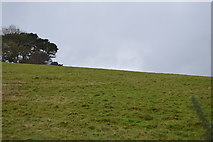 SX9575 : Grassy slope by N Chadwick