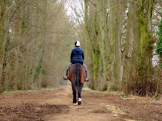 Horse riding on the bridleway